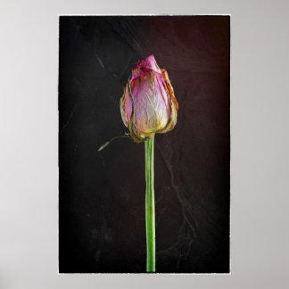 Old Rose on Slate Poster