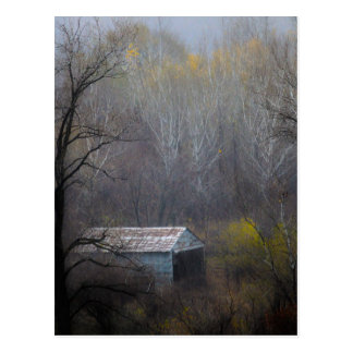Old Shed in the Woods Postcard
