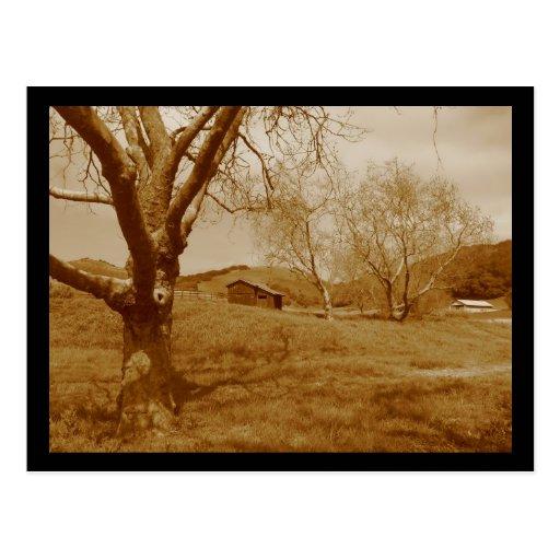 Old Shed Postcard