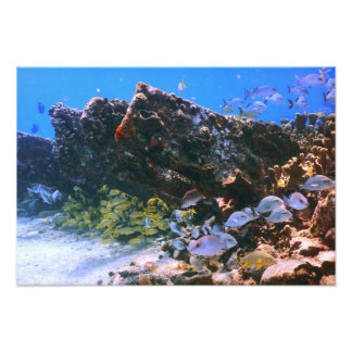 Old Shipwreck and Ref Fish Photo Print