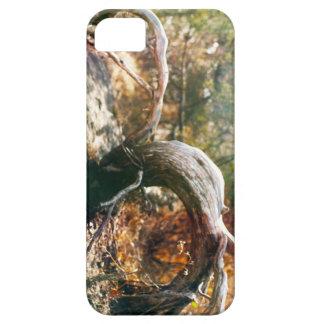 Old Stump iPhone 5 Cases