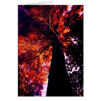 old sunset pine postcard