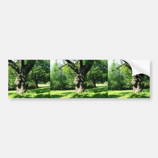 Old Thick Oak Tree Bumper Sticker