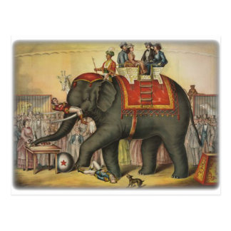 old time performing elephant postcard