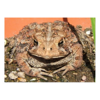 Old Toad ~ ATC Large Business Cards (Pack Of 100)
