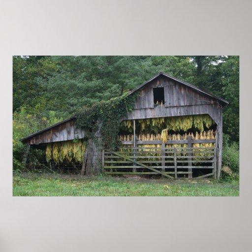 Old Tobacco Barn Poster Zazzle