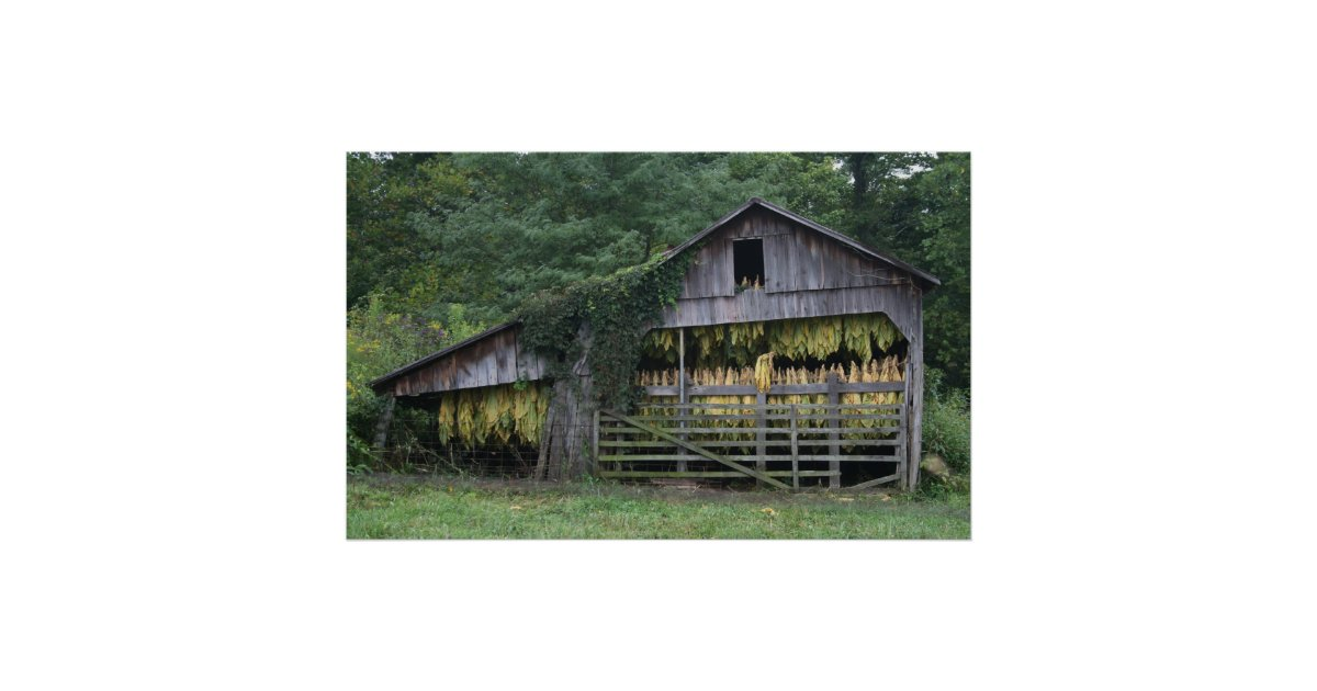 Old tobacco barn poster zazzle for Tobacco barn house plans