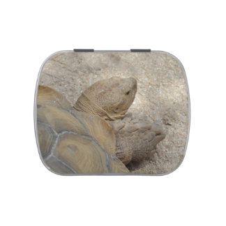 old tortoise reptile back view turtle animal candy tins