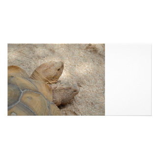 old tortoise reptile back view turtle animal photo card