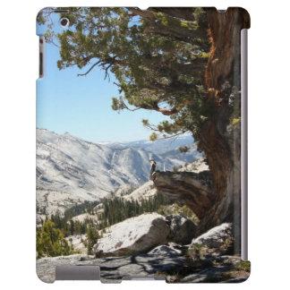 Old Tree at Yosemite National Park