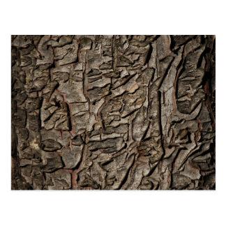 Old tree bark texture postcard