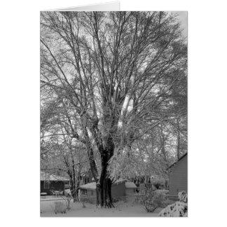 Old Tree in Grandma's Backyard Greeting Card