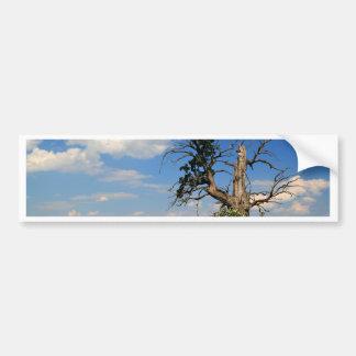 Old tree on a corn field bumper sticker