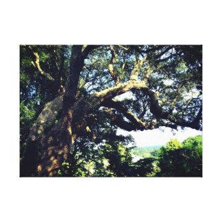 Old Tree Photo Single Print