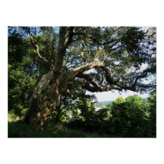 Old Tree Photo  Value Poster Paper (Matte)