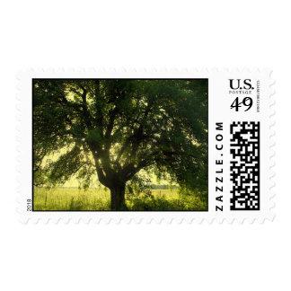 Old tree postage