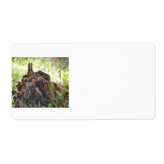 Old Tree Stump Shipping Label