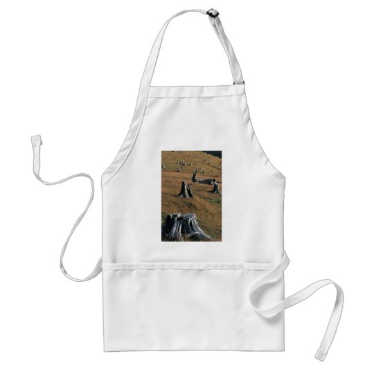 Old tree stumps on farmland adult apron
