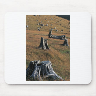 Old tree stumps on farmland mouse pad