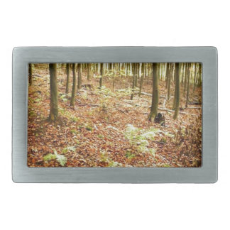 OLD TREES WITH LEAVES ON GROUND IN AUTUMN RECTANGULAR BELT BUCKLE