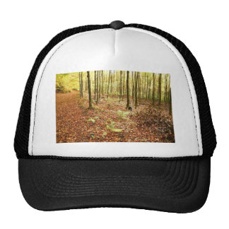 OLD TREES WITH LEAVES ON GROUND IN AUTUMN TRUCKER HAT