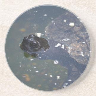 old turtle swimming sandstone coaster