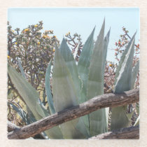 Old West Fence Agave and Cholla Cactus Glass Coaster