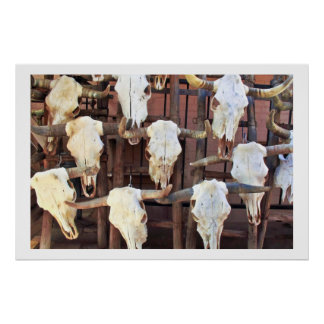 Old West Steer Skulls Poster