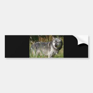 Old Wolf Bumper Sticker
