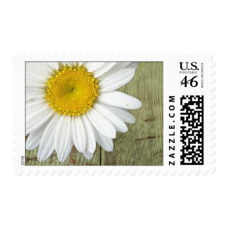 Old Wood Daisy Postage