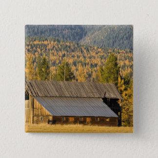 Old wooden barn with autumn tamaracks near pinback button