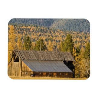 Old wooden barn with autumn tamaracks near vinyl magnets