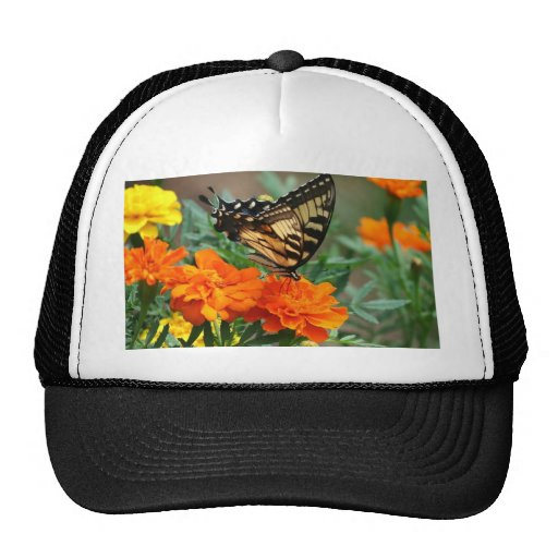 Old World Swallowtail Butterfly Papilio Machaon Hat
