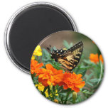 Old World Swallowtail Butterfly Papilio Machaon Fridge Magnets