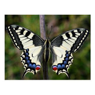 Old World Swallowtail (Lio de papá machaon)