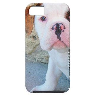 Olde English Bulldog Puppy iPhone 5 Cover