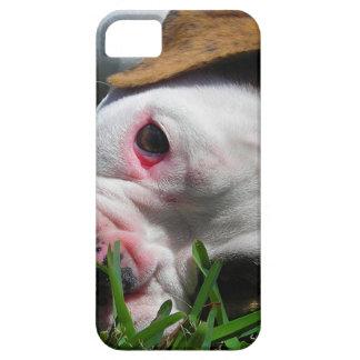 Olde English Bulldog Puppy iPhone 5 Cases