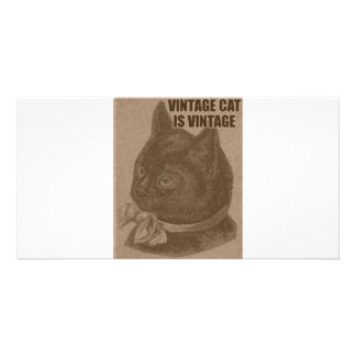 Olde LOLcat Card