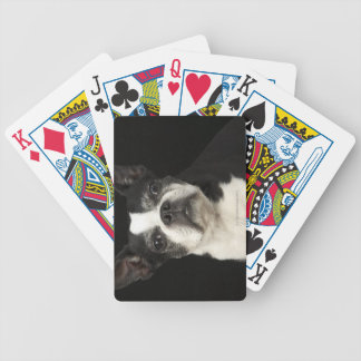 Older Bosten Terrier on black background Bicycle Playing Cards