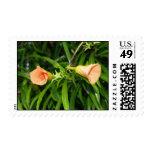 Oleander amarillo sellos