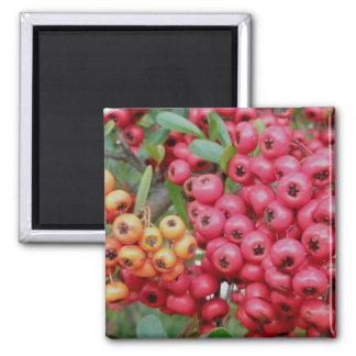 Oleander Berries Coordinating Items Magnet