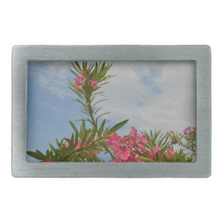 oleander bush flower floral florida belt buckles