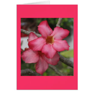 Oleander Stationery Note Card