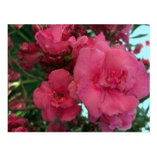 Oleander doble 4 postal