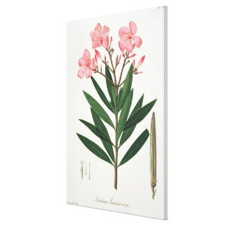 Oleander from 'Phytographie Medicale' by Joseph Ro Canvas Print
