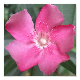 Oleander Pink Flower 5.25x5.25 Square Paper Invitation Card