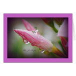 Oleander Raindrops Cards