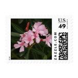 Oleander rosado sello