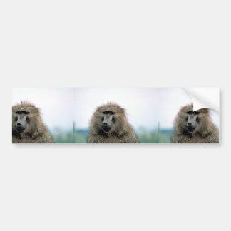Olive Baboon Bumper Sticker