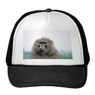Olive Baboon Mesh Hats